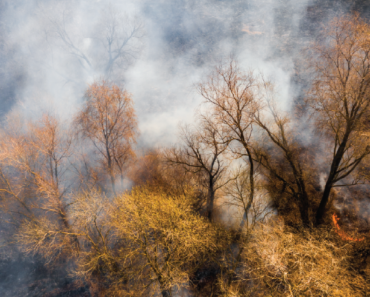 Safeguard Your Lungs From This Summer's Wildfire Smoke and Saharan Dust